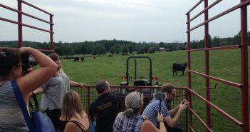 Ontario Corn Fed Beef - Gilbrea Farm