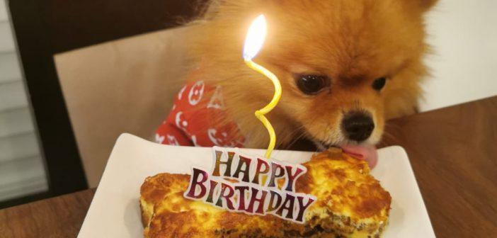 Happy Birthday to Portia! It's Her 4th Birthday!